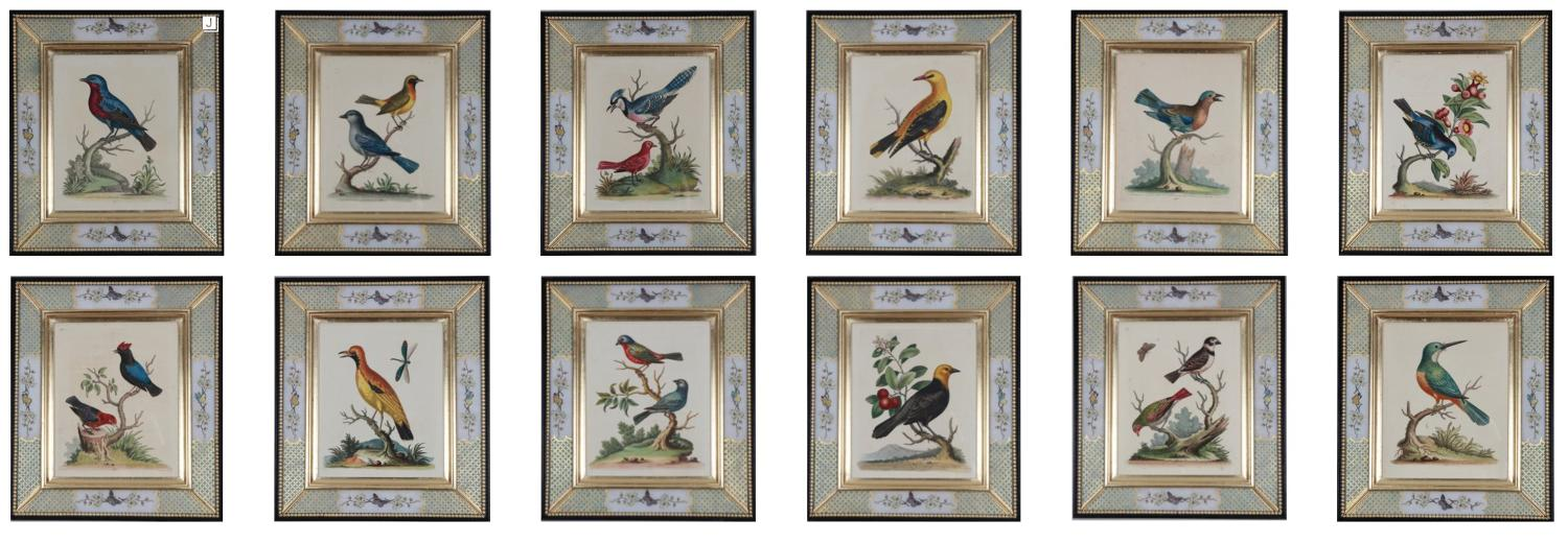 A group of 12 framed etchings of birds by George Edwards, c1760.