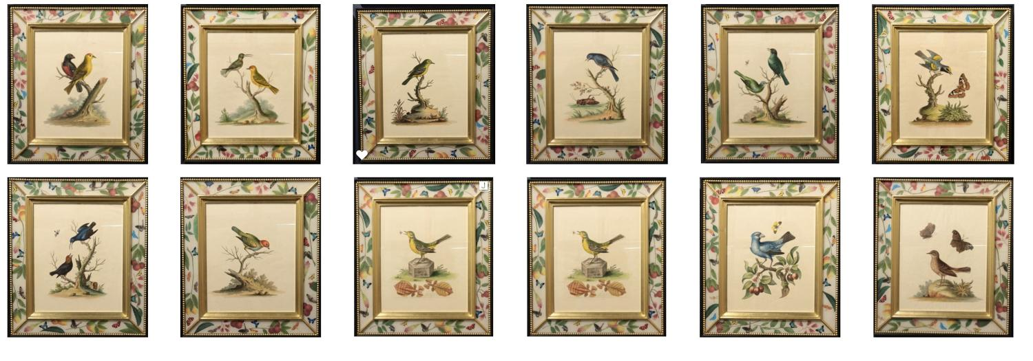George Edwards birds. A rare group of etchings in 'contrepreuve'