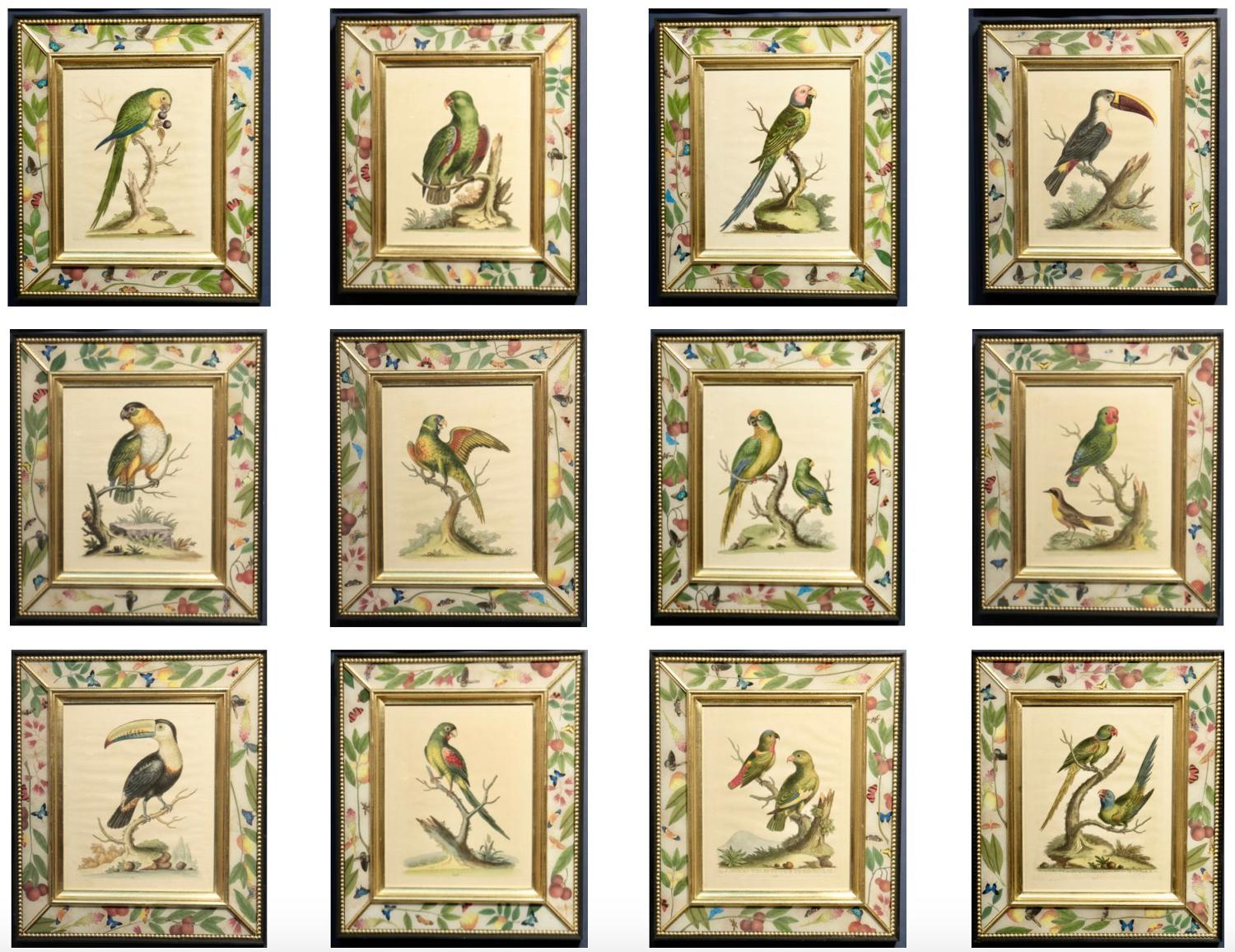 George Edwards 18th century etchings of parrots.