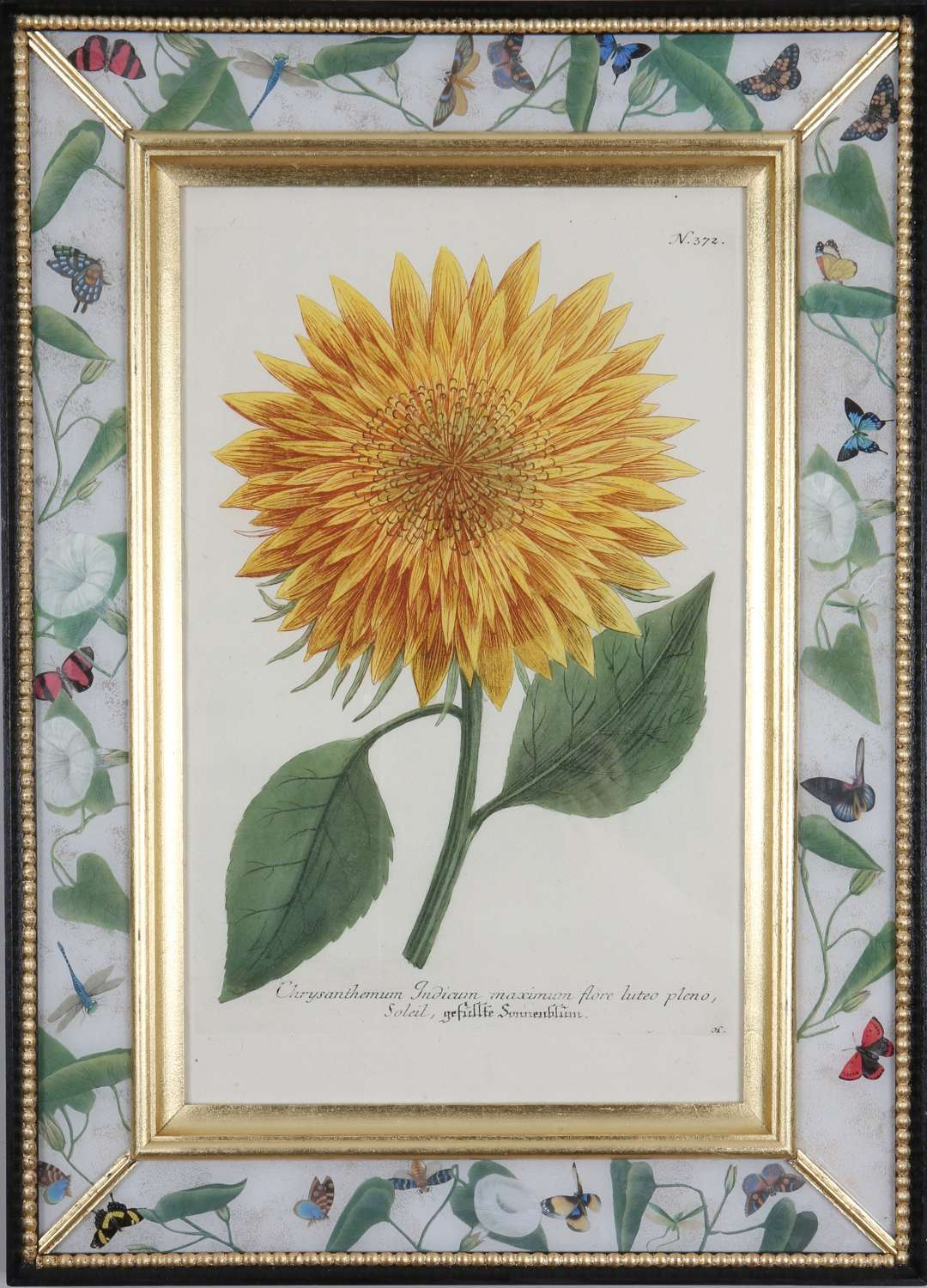 Johann Weinmann: 18th century engravings of sunflowers