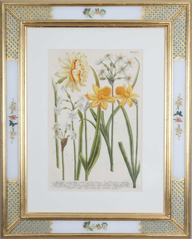 Johann Weinmann: c18th botanical engravings in decalcomania frames.