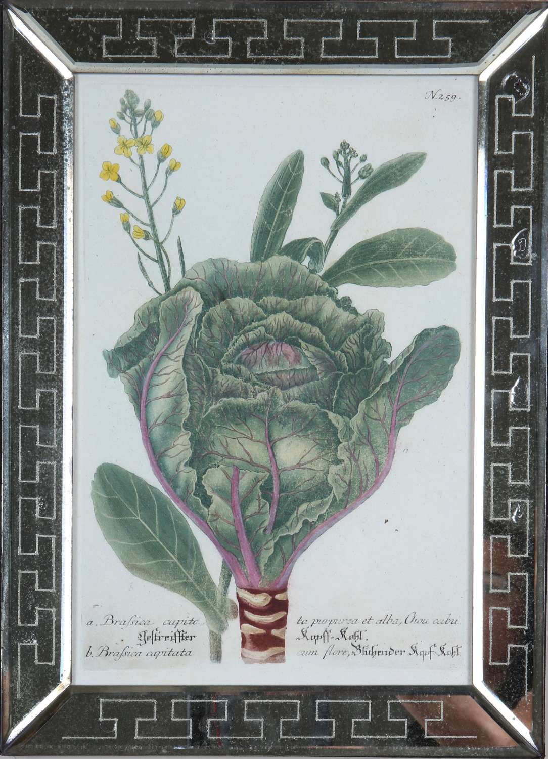 Johann Weinmann: c18th engravings of vegetables in mirror frames.