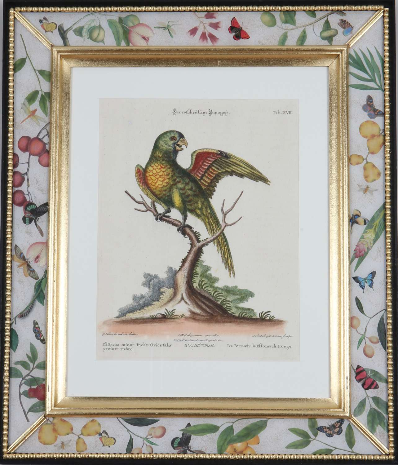 Johann Seligmann: Engravings of parrots after George Edwards, 1770.