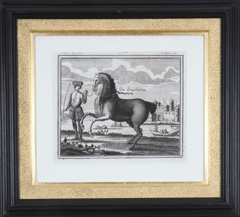 Georg Engelhard von Löhneisen: 18th Century Engravings of Horses