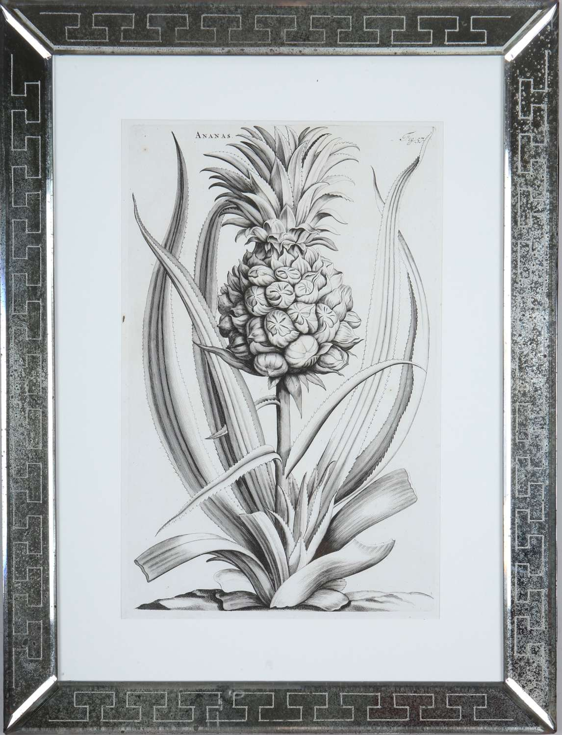 Jan & Caspar Commelin: 17th century botanical engravings.