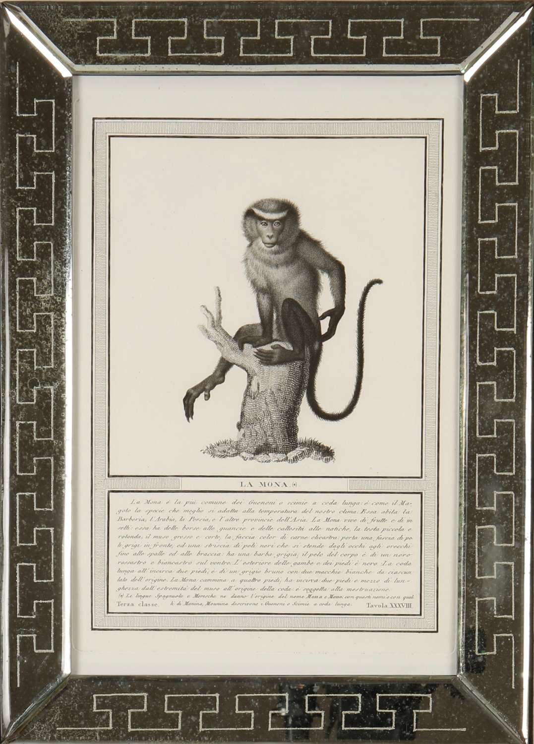 Nicolas Jacob: stipple engravings of monkeys, c1810.