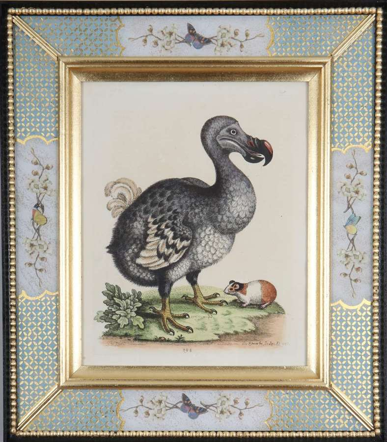 George Edwards: c18th engraving of a dodo in a decalcomania frame